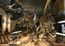 北九州市立自然史・歴史博物館