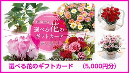 【WEBで使える】選べる花のギフトカード